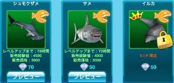鮫とイルカ